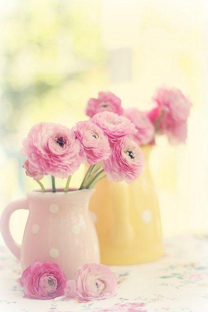 Цветы в деталях: ранункулюсы