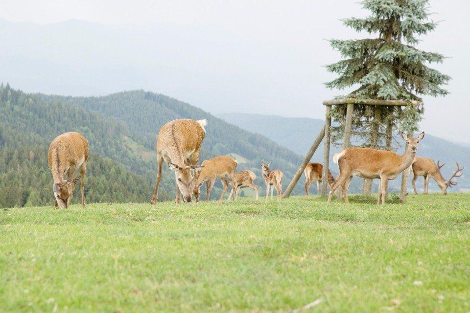 Deer Queen: стилизованная съемка