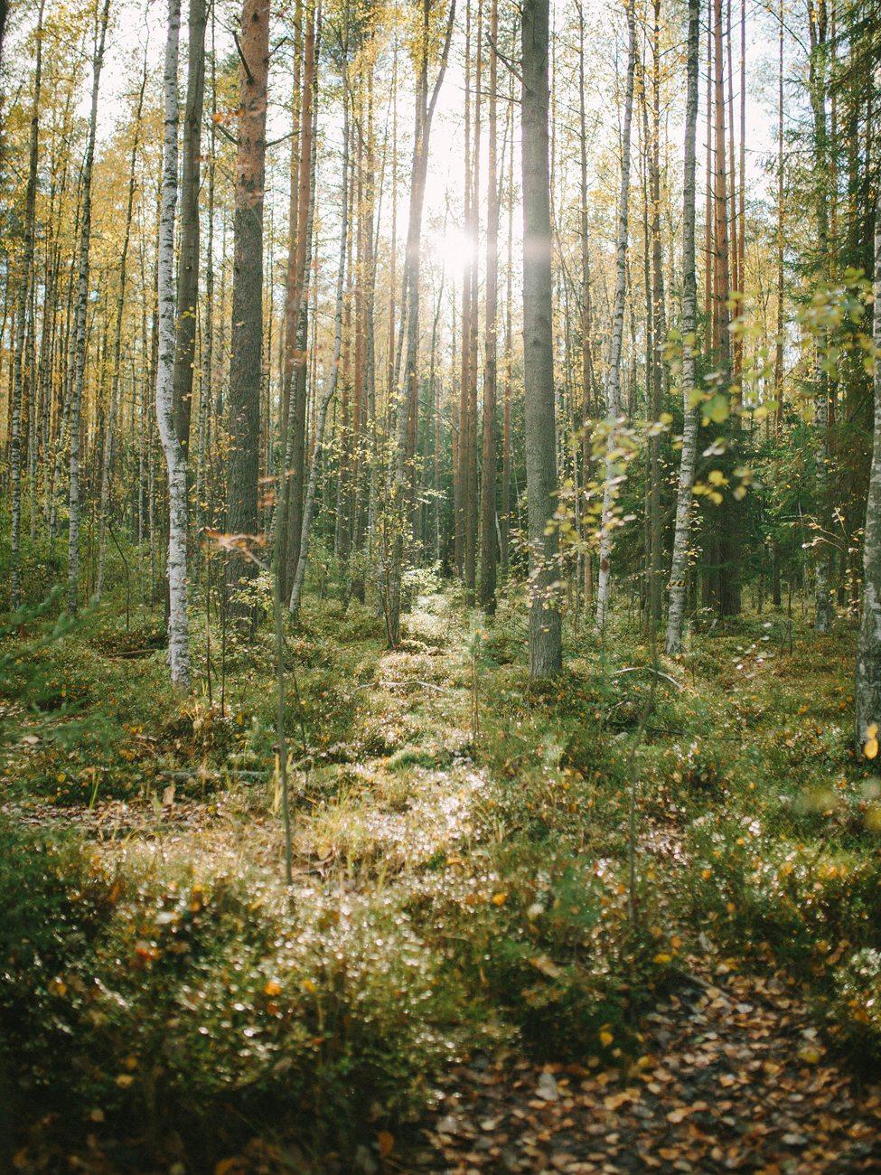 Прогулки по сказочному лесу: стилизованная съемка