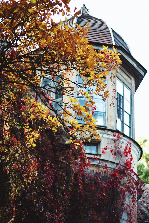Осенние краски нежности: стилизация