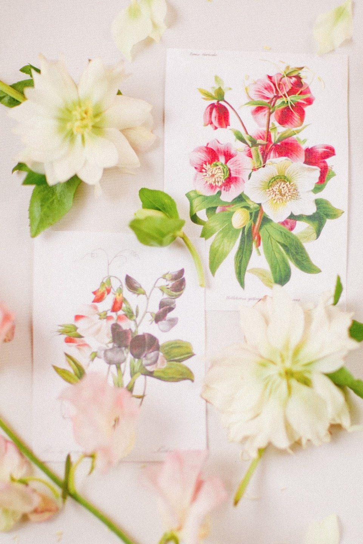 Любовь к ботанике: стилизованная фотосессия
