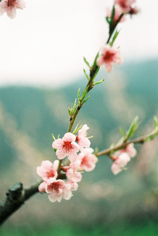 Сладкий персик: стилизованная фотосессия