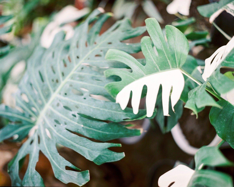 Ботаника: стилизованная фотосессия