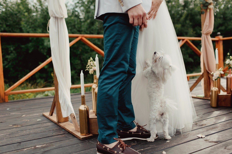 Домашние животные на свадьбе: что нужно учесть?