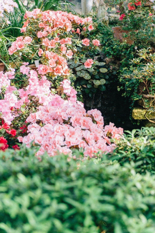 В сказочном саду: стилизованная фотосессия