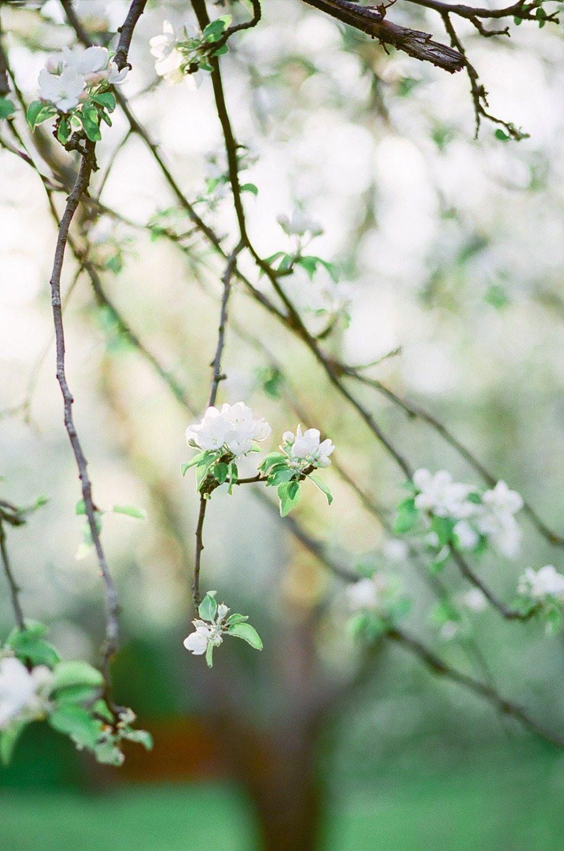 Аромат весны: стилизованная фотосессия