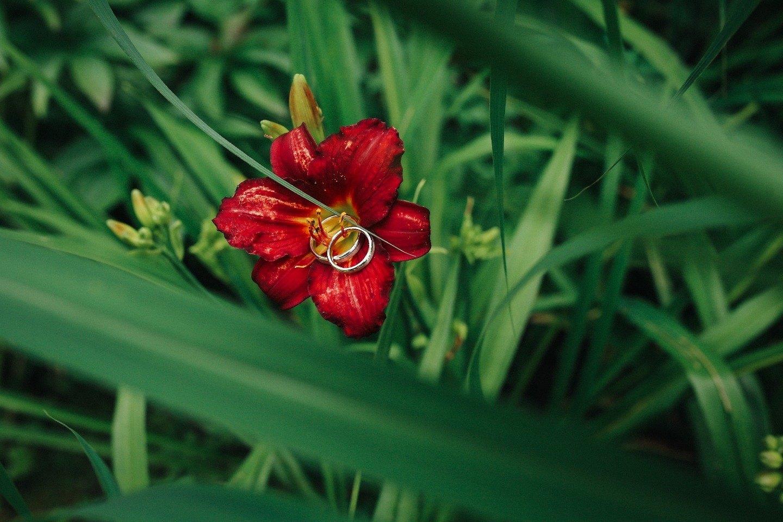 Спелая слива: классическая свадьба в неклассическом цвете