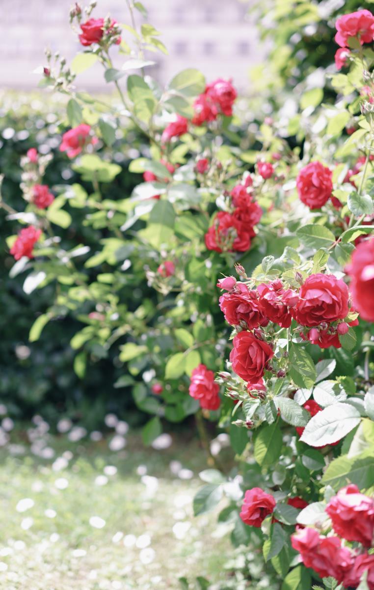 Романтика цветущего сада: свадьба на Пироговском водохранилище