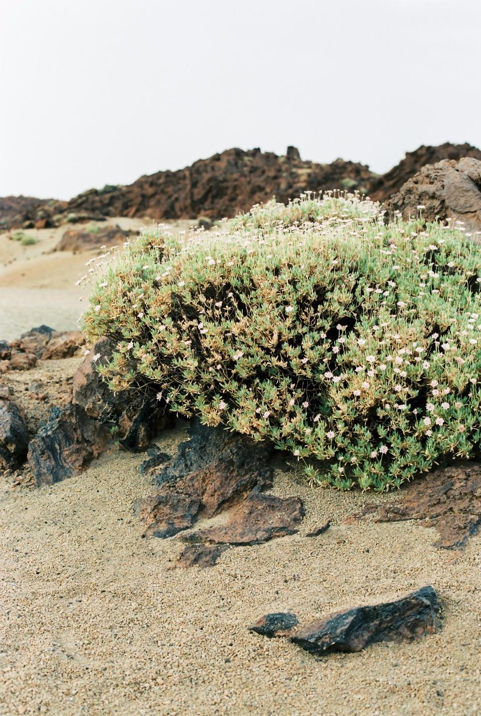 Flowers of Desert: love-story на острове Тенерифе