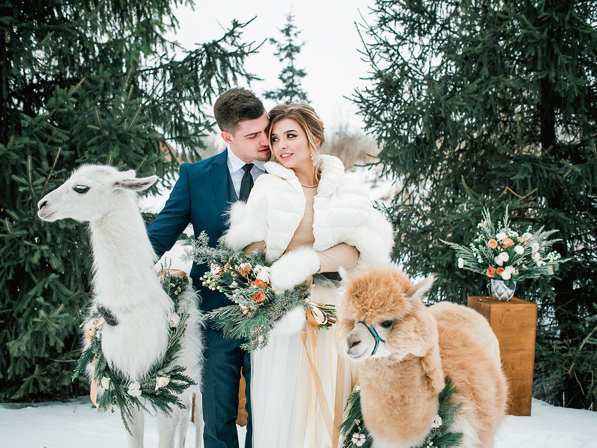 Lama Wedding: стилизованная фотосессия