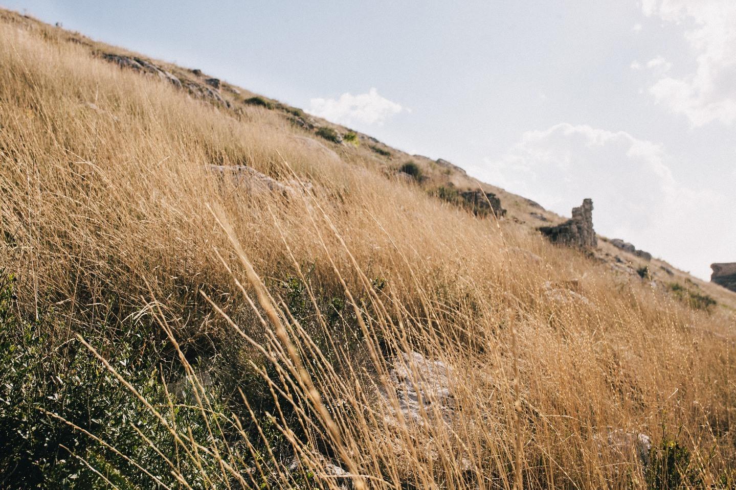 Лавандовая история: свадьба в Крыму