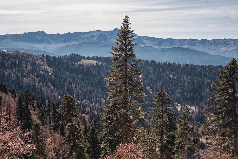 Осень в горах: свадьба в Сочи
