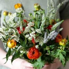 pandarossa flowers